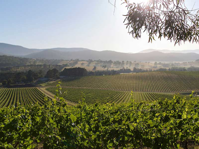 Yarra Valley - De Bortoli Estate