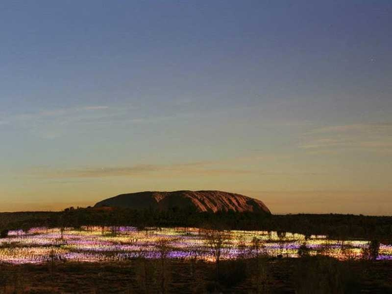 Uluru Sunset & Field of Light