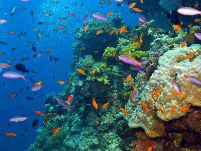 Australian Urban Rock & Reef
