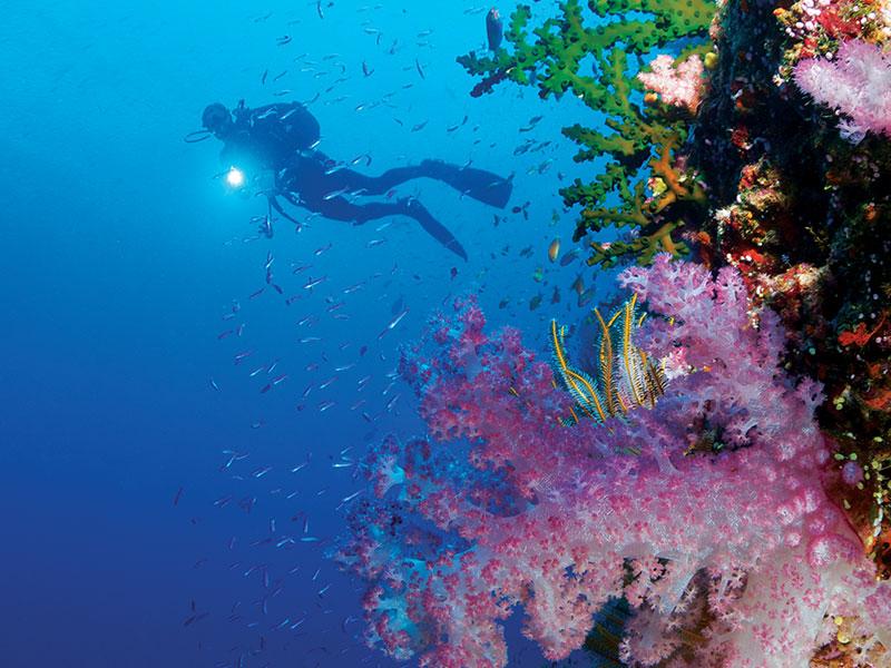 Dolphin Island - Scuba