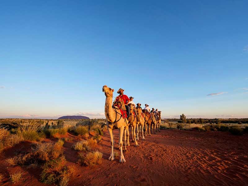 Uluru Sunset Camel Ride