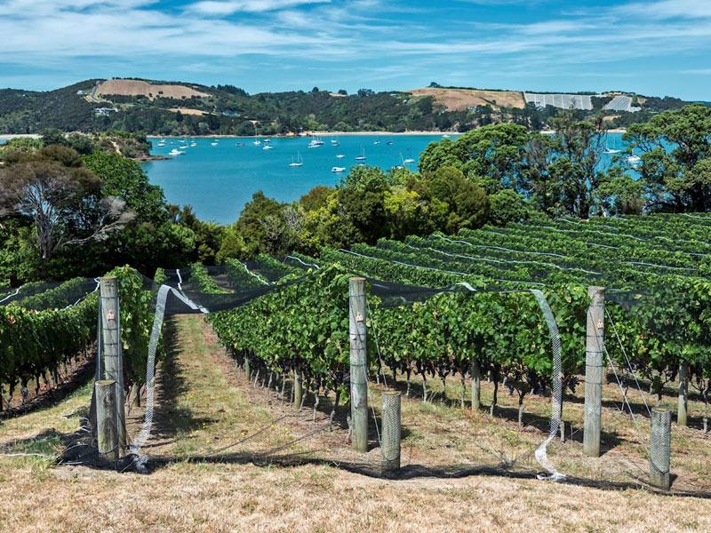 Waiheke Island - Mudbrick Vineyard