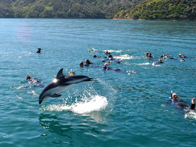 Kaikoura - Swimming with the Dolphins