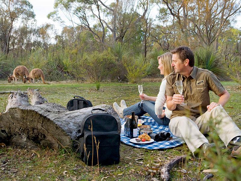 The Louise, Barossa Valley - Breakfast with Kangaroos