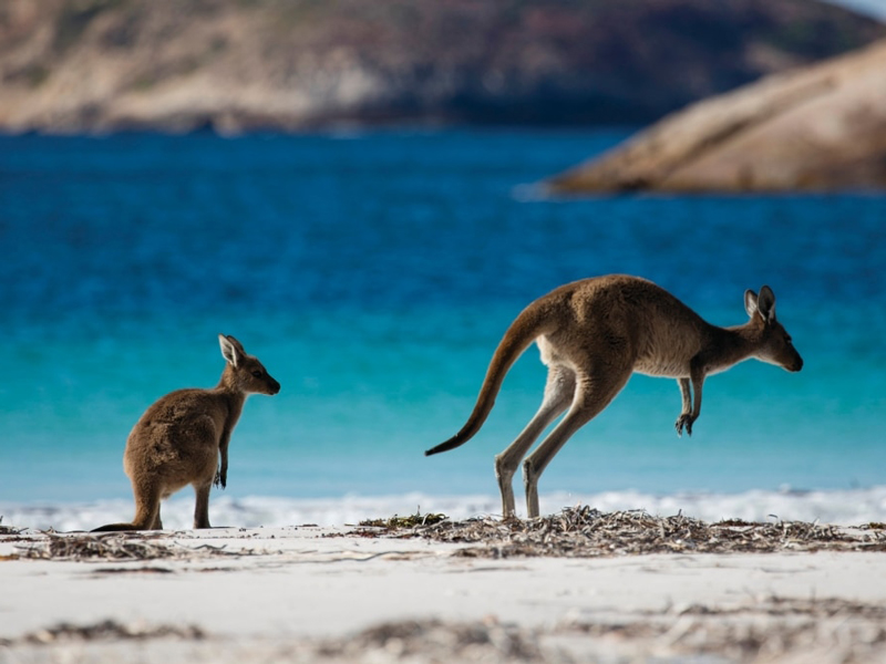 Tasmania - Freycinet National Park