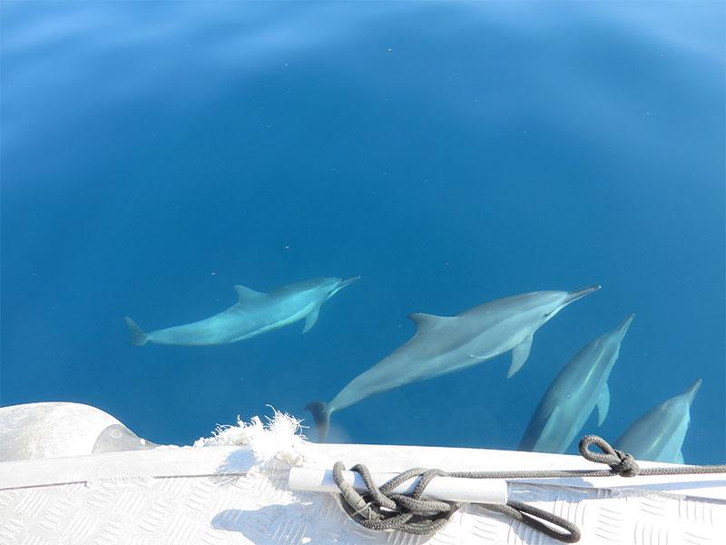 Tropica Island Resort - Dolphins