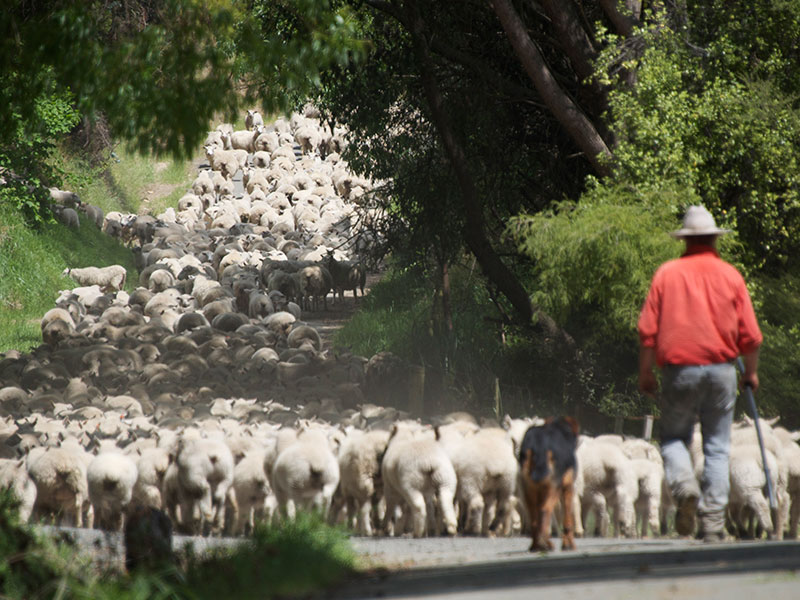 Farming Activities at The Farm Cape Kidnappers & Wharekauhau Country Estate