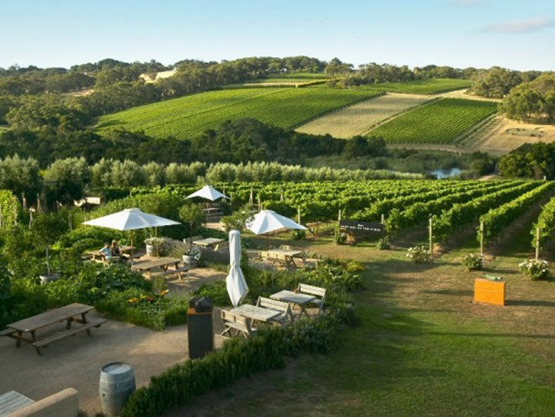 Hunter Valley Day Excursion